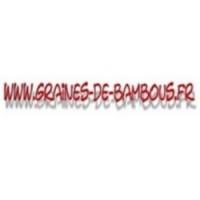 Coriandre coriandrum sativum condimentaire www graines de bambous fr