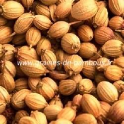 Coriandre à grosses graines réf.111