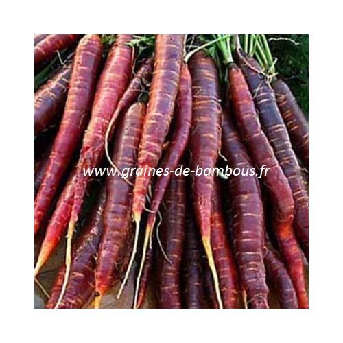 Cosmic purple graines de carotte violette