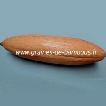 Courge Banane rose Géante réf.375