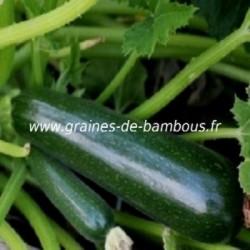 Courgette verte des maraichers graines seeds samen