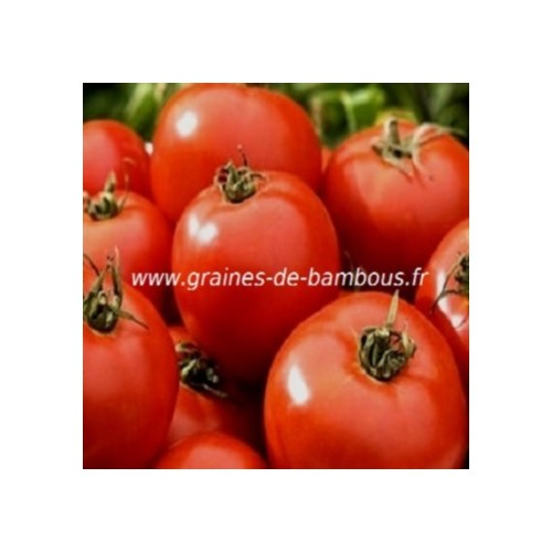 Druzba graines de tomate rouge fruit
