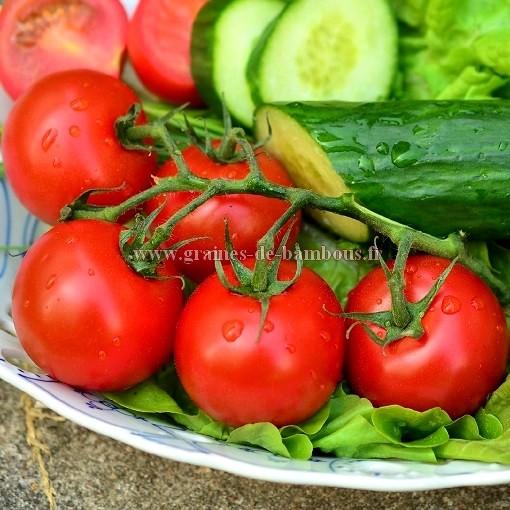Floradade tomate