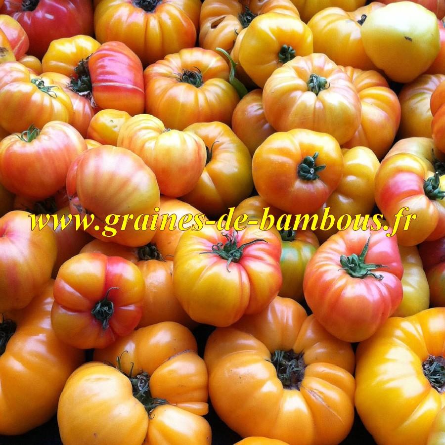 Gold medal graines de tomate