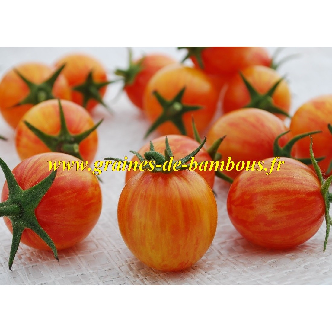 Golden bumble bee graines de tomates