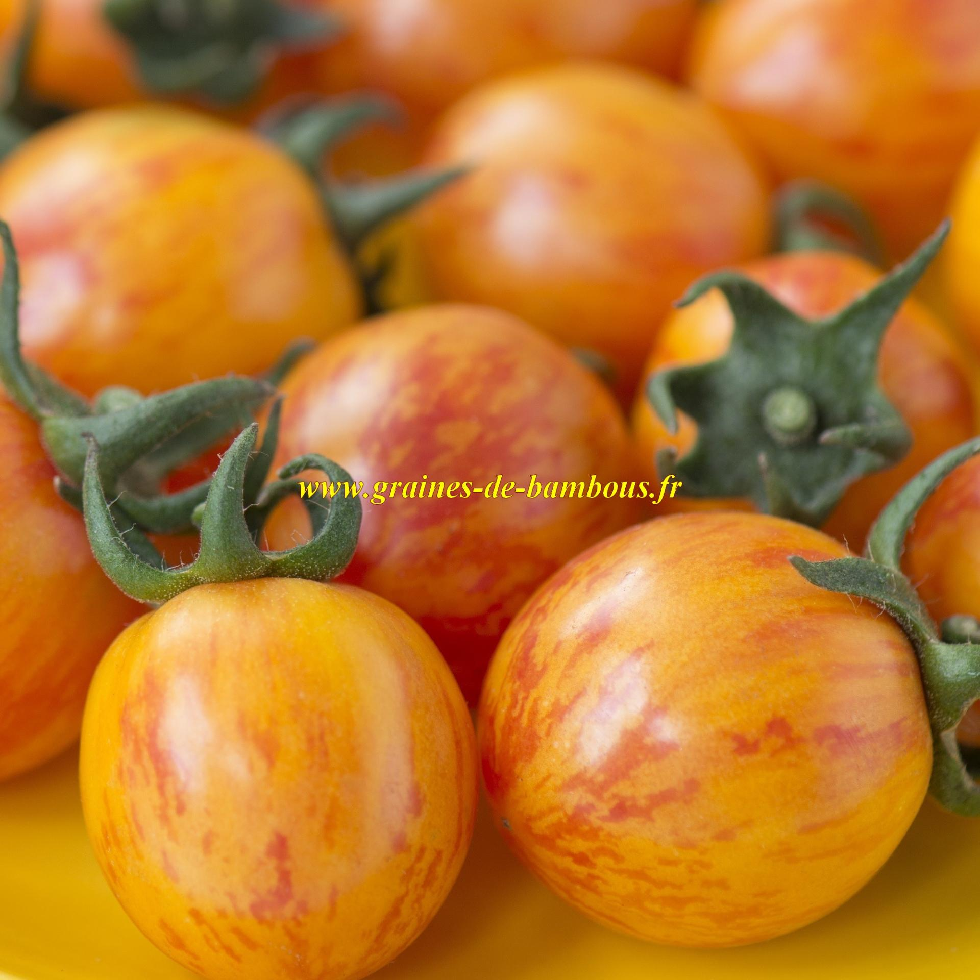 Golden bumble bee tomato