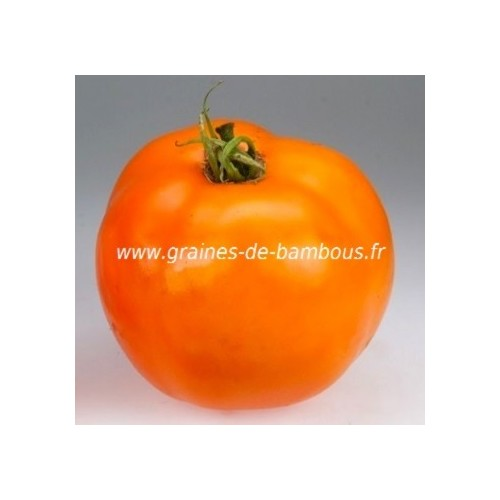 Golden sunray graines de tomate