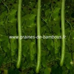 Gourde courge italian cucuzzi graines de bambous fr