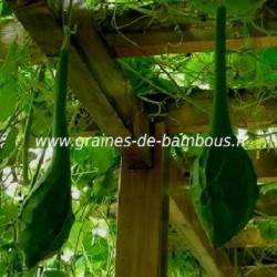Gourde maranka graines de bambous fr
