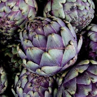Artichaut violet de provence réf.632