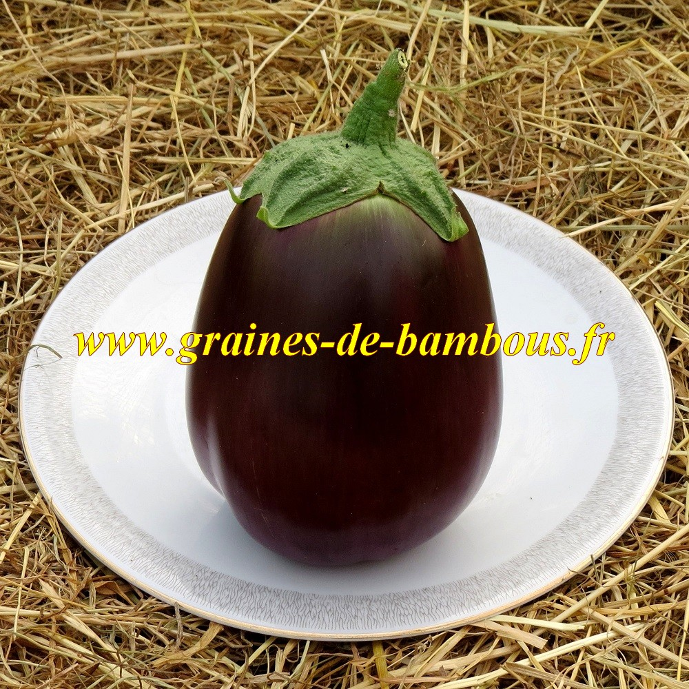 Graines aubergine black beauty