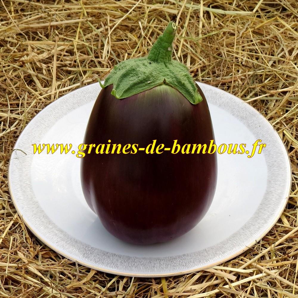 Graines aubergine black beauty