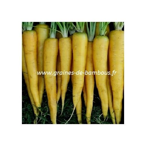 Graines carotte jaune legume et potagere