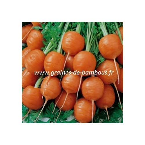 Graines carotte ronde de paris