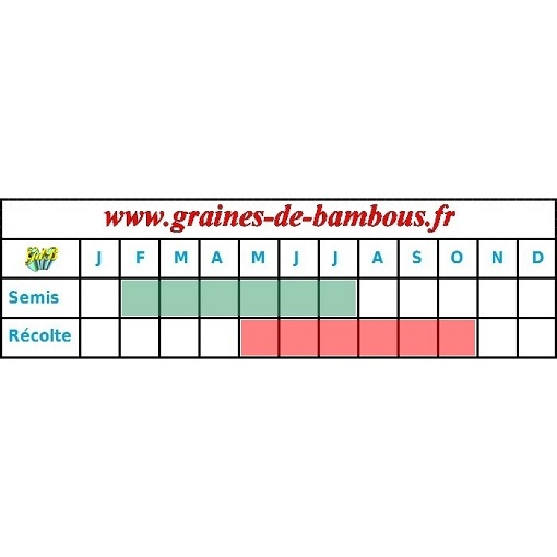 Graines chicoree scarole grosse bouclee periode semis recolte