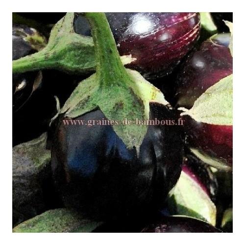 Graines d aubergine ronde