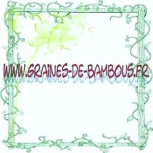 Graines de bambous geants sulphurea viridis