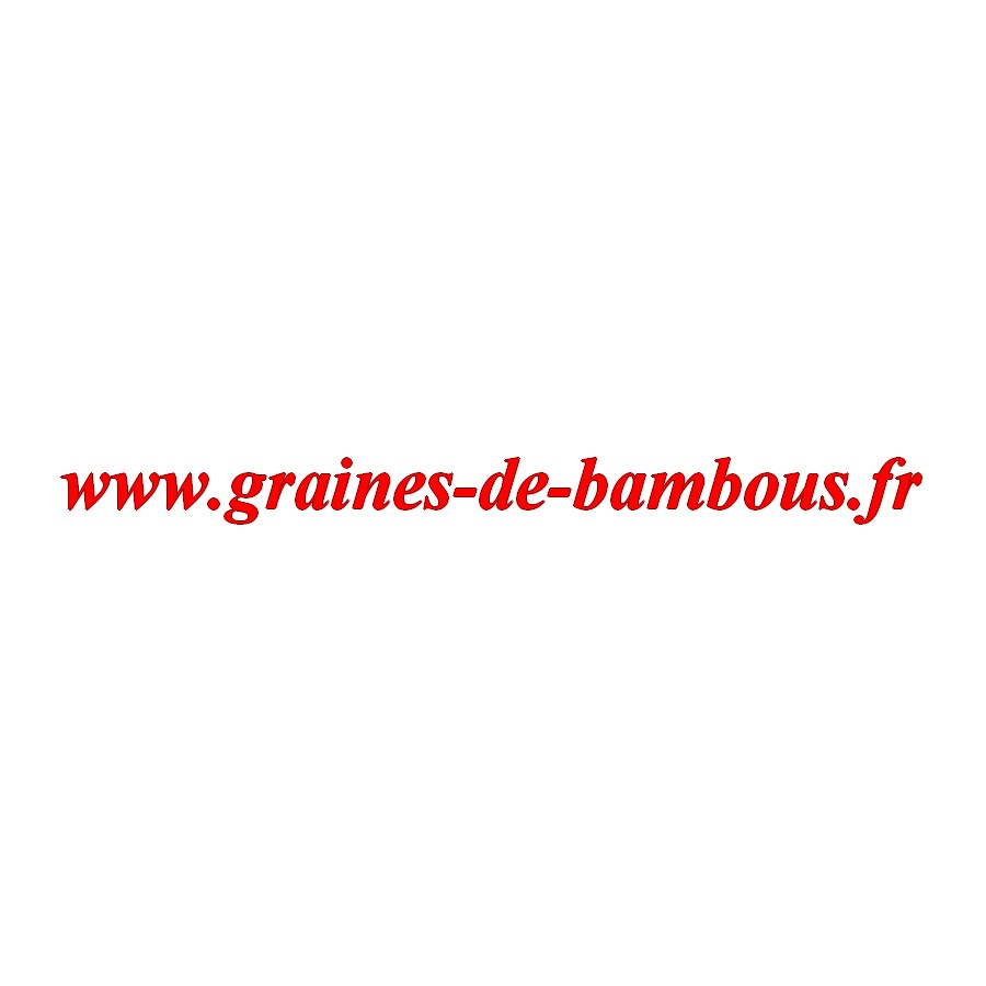 Graines de bambous fr chou cabus blanc