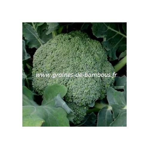 Graines de brocoli calabrese