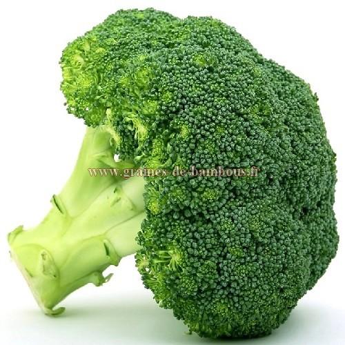 Graines de brocoli variete calabrais