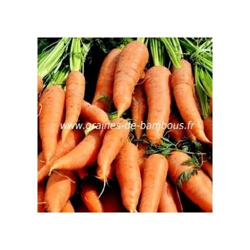Graines de carotte saint valery