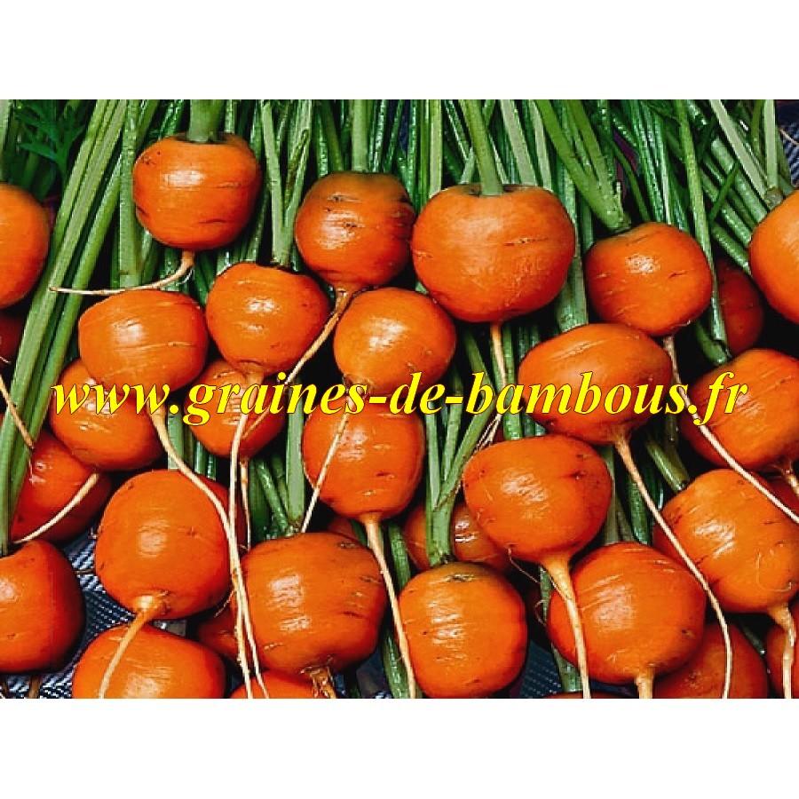 Graines de carotte variete ronde de paris