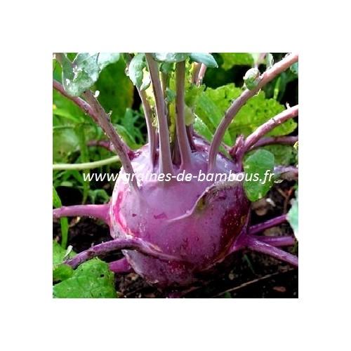 Graines de chou rave violet