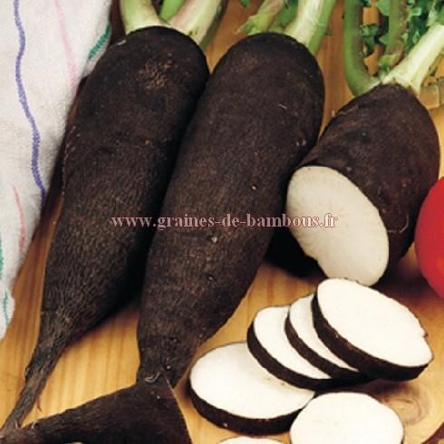 Graines de radis noir long