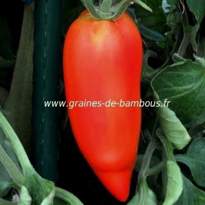 Tomate Andine Cornue réf.258
