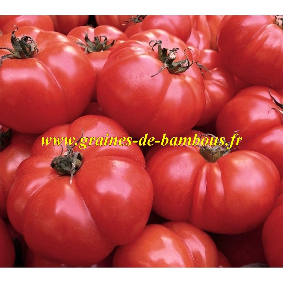 Graines de tomate belge geante
