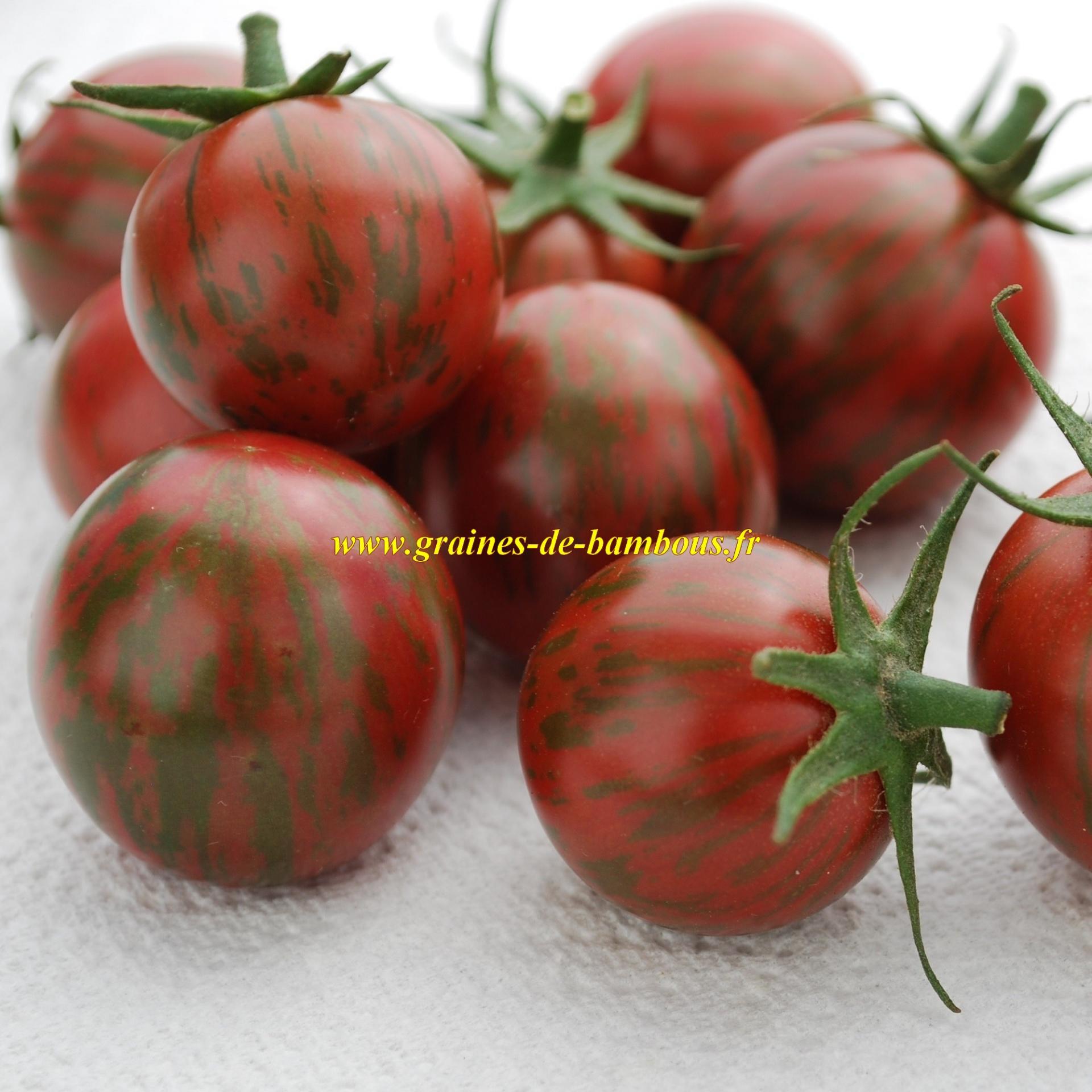 Graines de tomate cerise purple bumble bee - Pied de tomate cerise ...