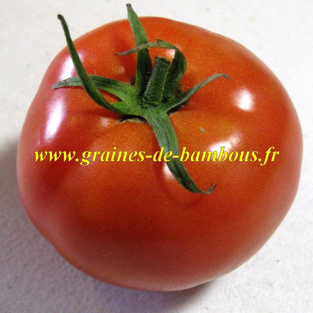 Graines de tomate druzba graines de bambous eu