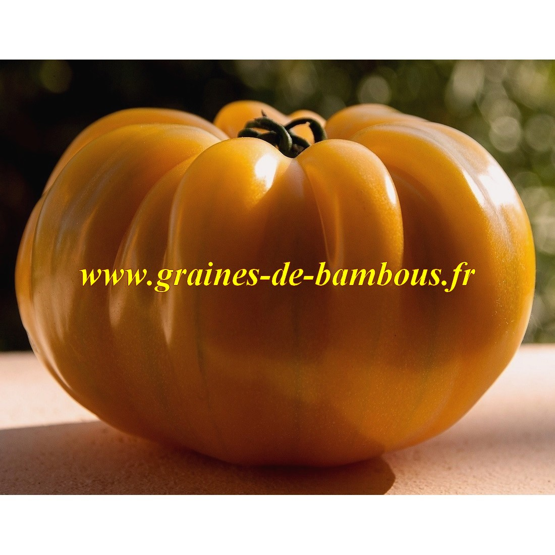 Graines de tomate gros fruit