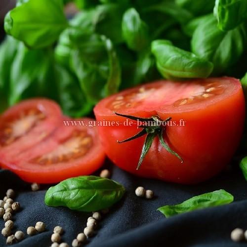 Graines de tomate krakus