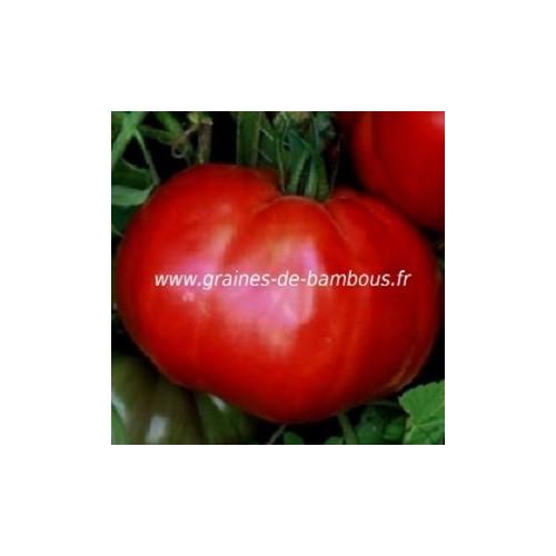 Graines de tomate omar s lebanese fruit