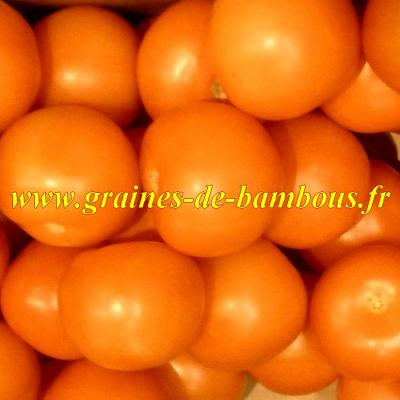 Tomate orange Queen 1000 graines