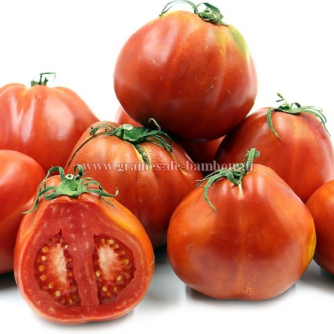 Graines de tomate red pear
