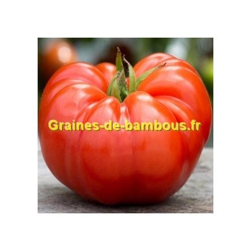 Graines grosse tomate beefsteak