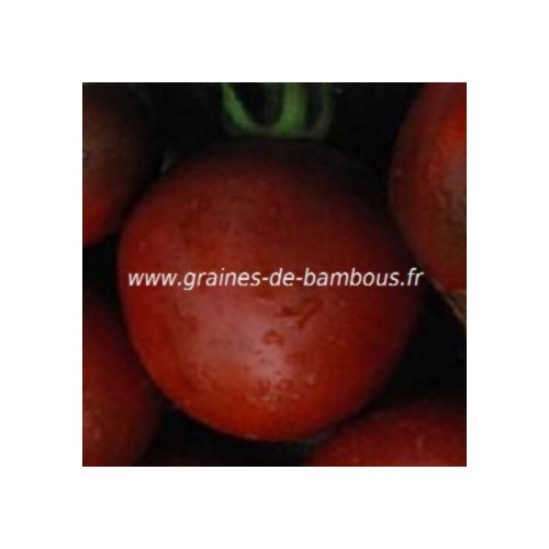 Graines nyagous tomate