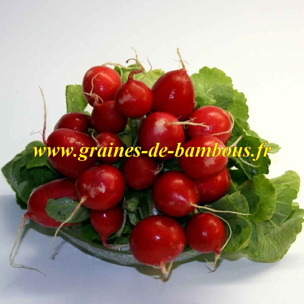 Graines radis cherry belle