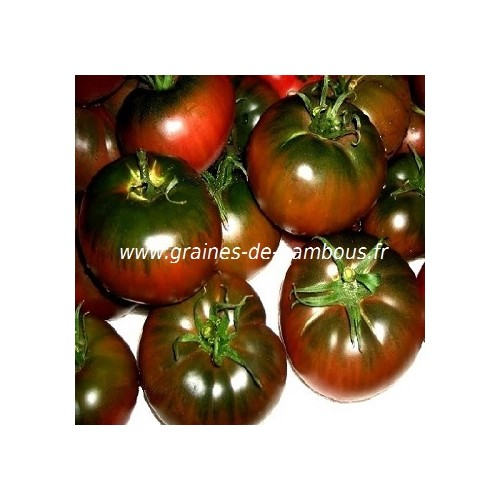 Graines tomate black from tula
