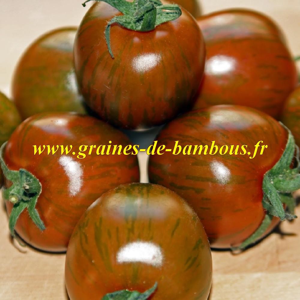 Graines tomate black zebra sur graines de bambous fr