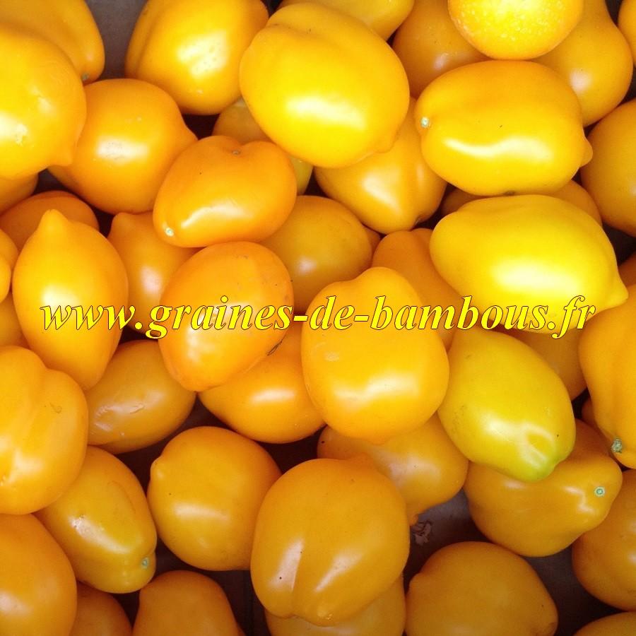 Graines tomate citron lemon tree