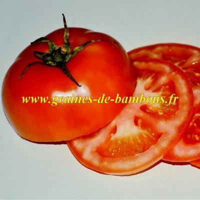 Tomate Dutchman réf.609
