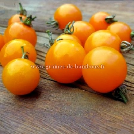 Graines tomate figiel orange