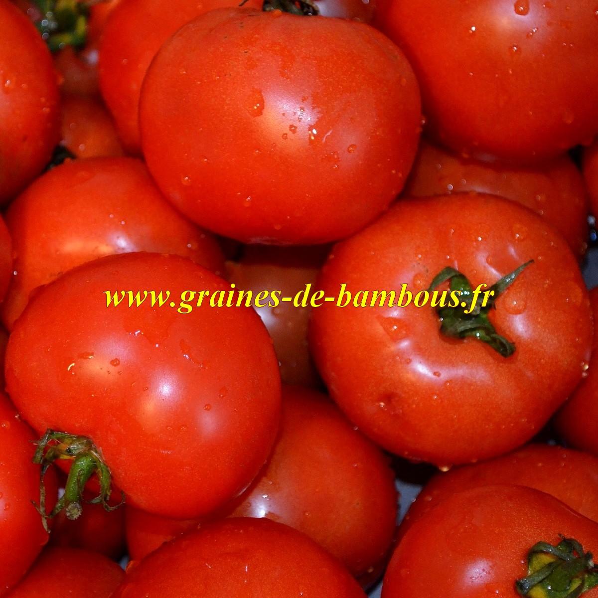 Graines tomate floradade