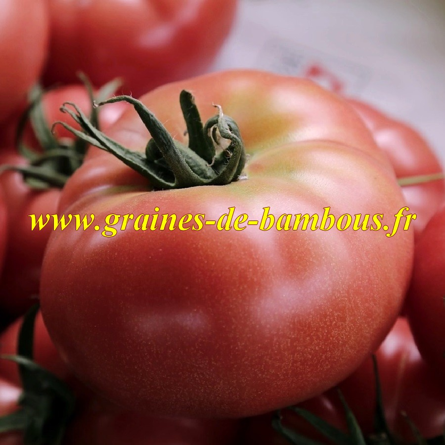 Graines tomate giant belgian pink