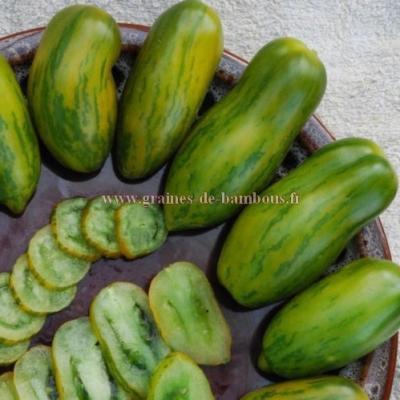 Tomate green Sausage réf.606