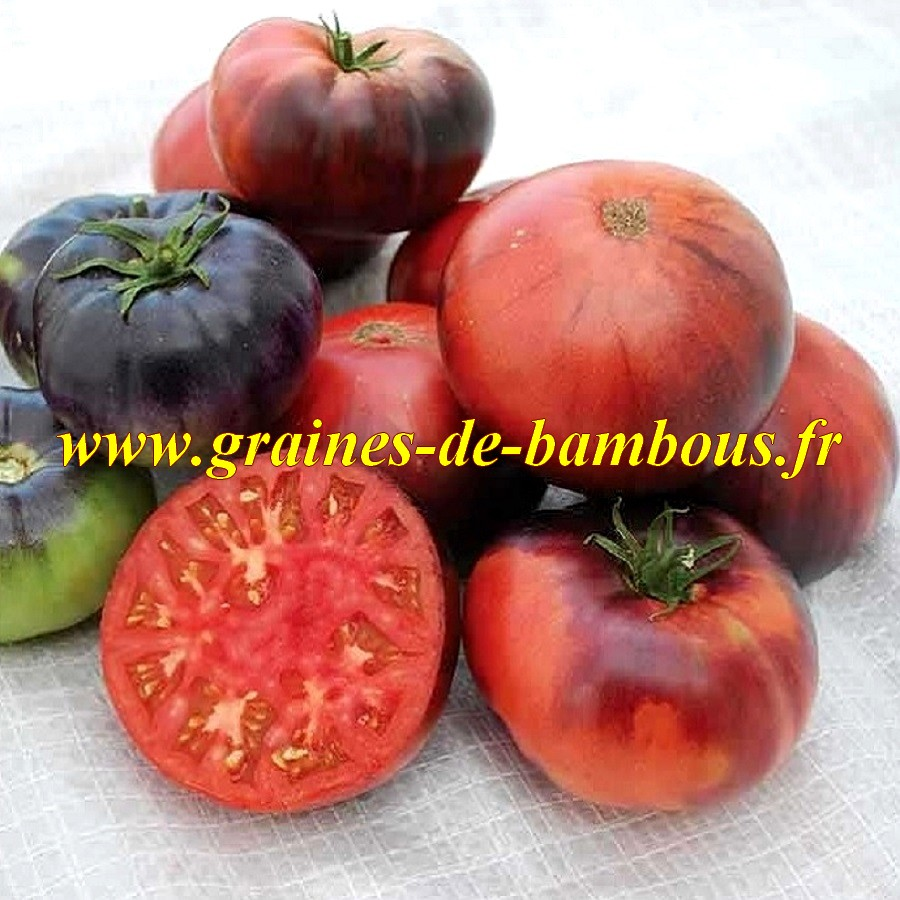 Graines tomate indigo beauty blue