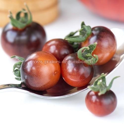 Tomate Indigo blue Berries réf.358